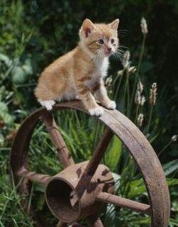 Cute wheel